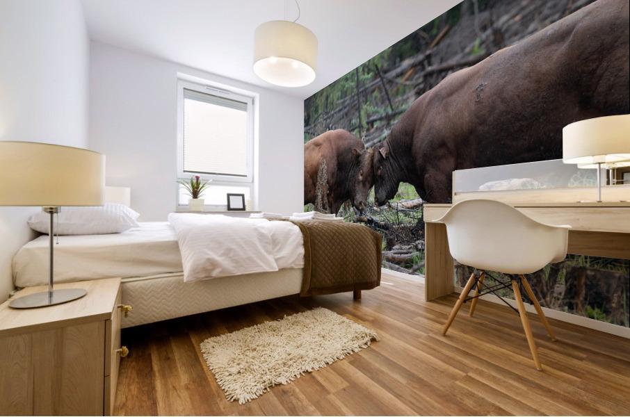 Bulls Mural print