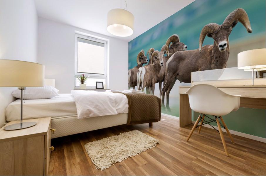 Bighorn Sheep Mural print