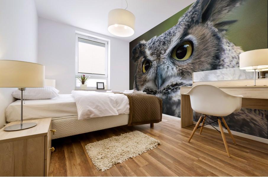 Owl  5 Mural print