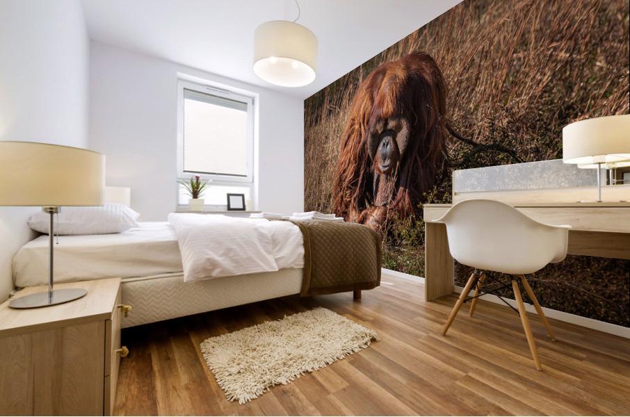 Orangutan Mural print