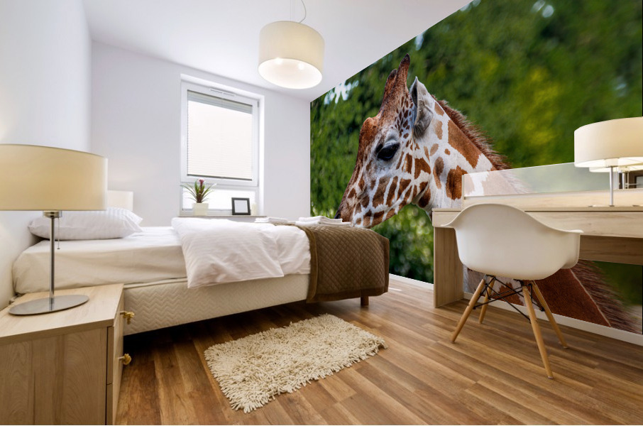 Reticulated Giraffe 1 Mural print