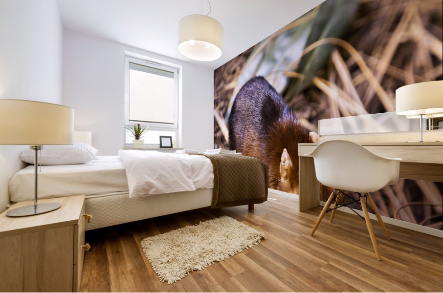 Small Elephant Mouse Mural print