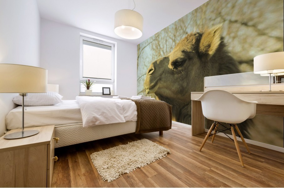 Aribian Camel Mural print