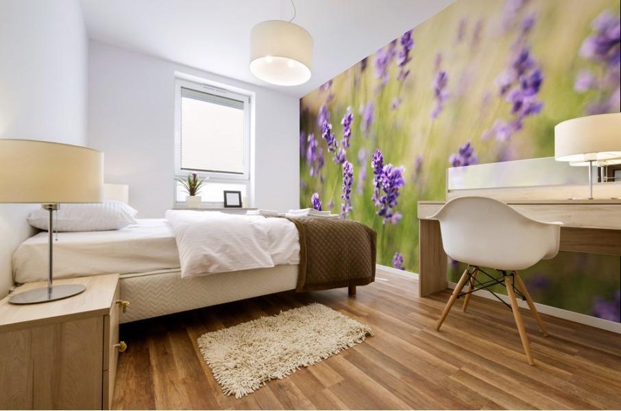Lavender flowers Mural print