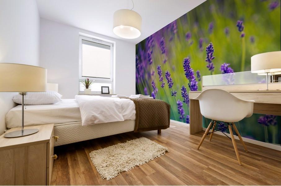 Beautiful Sunset lavender flowers Mural print