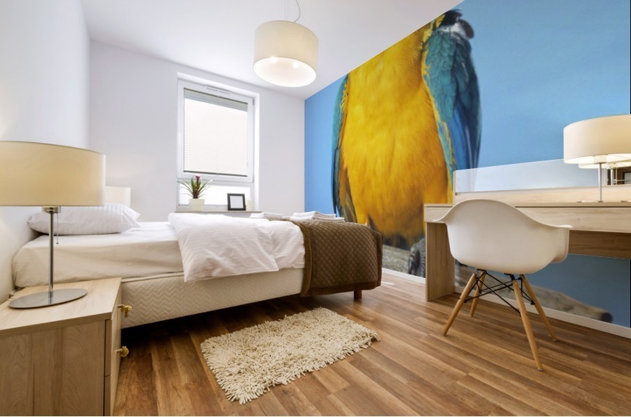 Blue-And-Gold Macaw Mural print