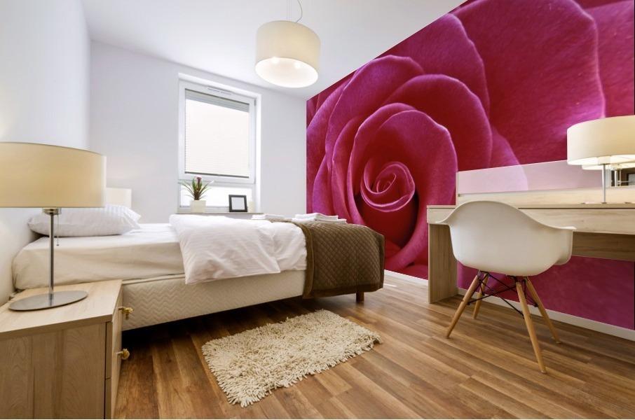 Rose Blossom Mural print