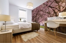 Cherry Blossom in a Park Mural print