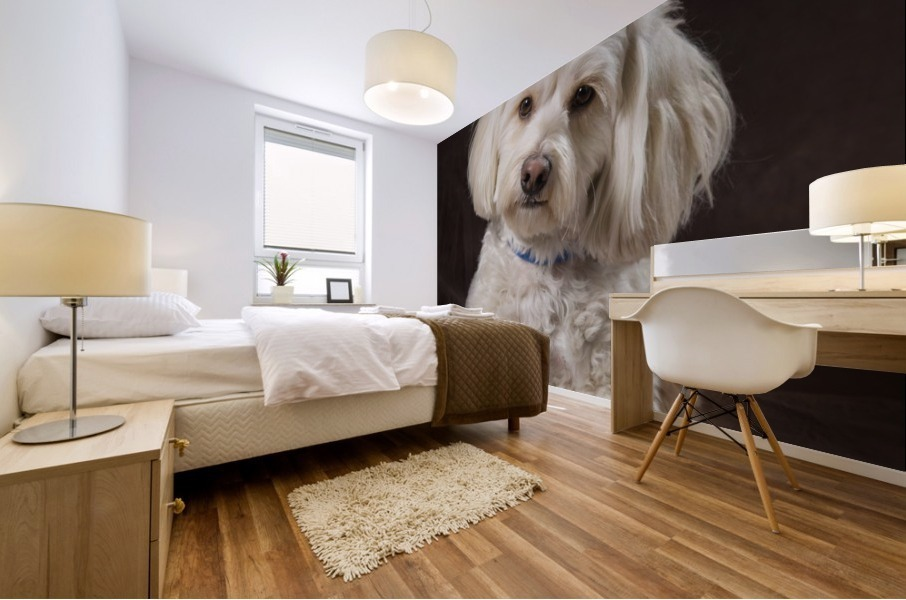 Shih Tzu-Poodle On A Brown Muslin Backdrop Mural print