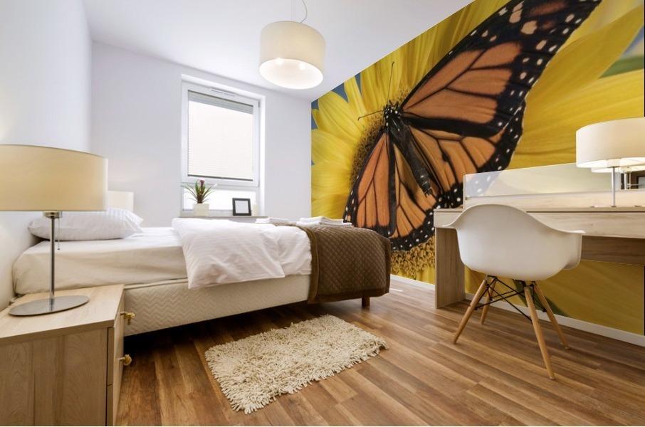 Monarch Butterfly On Sunflower. Mural print
