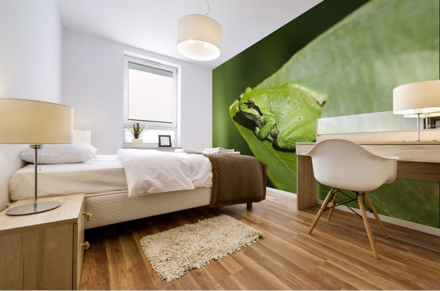 A Pacific Tree Frog (Pseudacris regilla) rests on a Wapato Leaf; Astoria, Oregon, United States of America Mural print