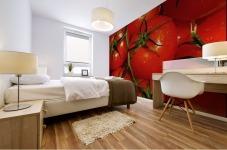 Tomatoes Mural print