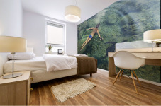 Hawaii, Oahu, Man And Hawaiian Sea Turtle Swimming Side By Side In The Ocean Reef, View From Above. Mural print
