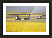Three Old Wooden Grain Elevators At Sunrise With Flowering Canola Fields In The Foreground And Background; Mosleigh, Alberta, Canada Picture Frame print