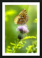 Thistle Nectar Picture Frame print