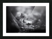 In the woods Picture Frame print