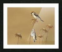 Woodchat Shrike Picture Frame print