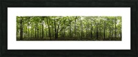 Panoramic image of a deciduous forest; Ontario, Canada Picture Frame print