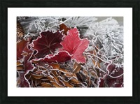 Hoarfrost covers holiday decorations on a wreath, Christmas season; Minnesota, United States of America Picture Frame print