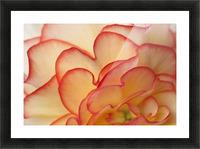 Macro View Of Begonia Petals, Girdwood, Southcentral Alaska, Summer Picture Frame print