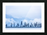 A bird flies above trees under a cloudy sky and fog on the coast of Resurrection Bay, South-central Alaska; Seward, Alaska, United States of America Picture Frame print