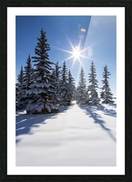 Snow covered evergreen trees on a snow covered hillside with blue sky and sun burst; Calgary, Alberta, Canada Picture Frame print