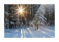 Sunburst coming through a snow covered forest; Kananaskis Country, Alberta, Canada Picture Frame print