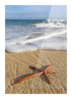 A red live Finger Starfish, also known as Linckia Sea Star, found along a sandy beach with white ocean tide washing up; Honolulu, Oahu, Hawaii, United States of America Picture Frame print