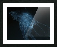 Glowing blue jellyfish in the dark water Picture Frame print