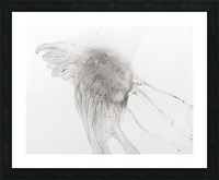 Jellyfish against a white background Picture Frame print