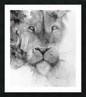 Illustration of a lion's face and a mottled background Picture Frame print