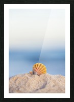 A rare rainbow color Hawaiian Sunrise Scallop Seashell, also known as Pecten Langfordi, in the sand at the beach at sunrise; Honolulu, Oahu Hawaii, United States of America Picture Frame print