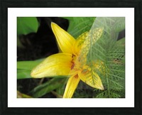 Yellow Flower-2 Picture Frame print