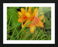 Oranger Lilly 2 Picture Frame print
