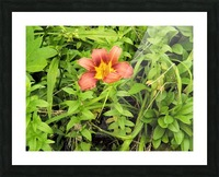 Oranger Lilly 4 Picture Frame print