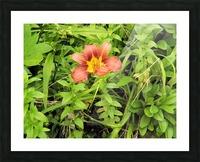 Oranger Lilly 4 Impression et Cadre photo