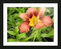 Oranger Lilly 3 Picture Frame print