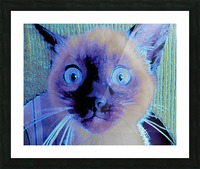 electric kitty Picture Frame print