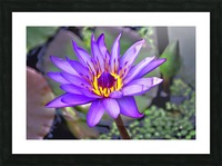 waterflower Picture Frame print