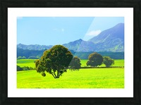 green tree in the green field with green mountain and blue sky background Picture Frame print