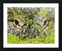 The Staredown Picture Frame print