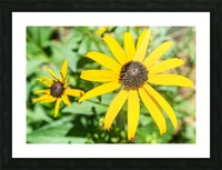 Yellow Cone Flowers  Picture Frame print