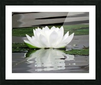 FloweringLilyPad Picture Frame print