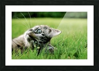 ucing Picture Frame print