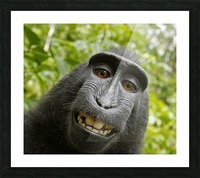 monyet Impression et Cadre photo