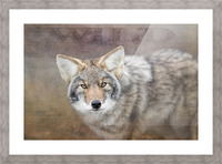 Wild Picture Frame print