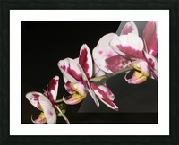 Sexy Orchid Picture Frame print