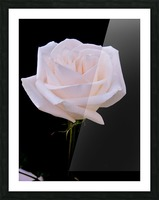 Rose for bride Picture Frame print
