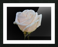 Calming rose Picture Frame print
