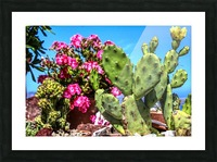 Cactus and colourful Flowers Picture Frame print